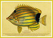 Hawaiian Fish Digital Art Prints - Lauhau - Bluestripe Butterflyfish Print by James Temple