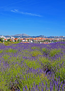 South Of France Posters - Lavendar of Provence Poster by Corinne Rhode