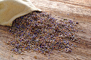 Artisan Photos - Lavender and Burlap by Olivier Le Queinec