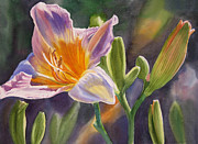 Realistic Watercolor Posters - Lavender and Gold Lily Poster by Sharon Freeman