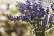 Bouquet Photo Posters - Lavender Bokeh Poster by Rebecca Cozart