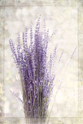 Margaret Hormann Bfa Framed Prints - Lavender Bunch Framed Print by Margaret Hormann Bfa