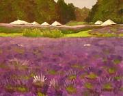 Lavender Festival Print by Mary McInnis