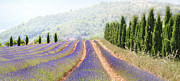 In A Row Art - Lavender Fields, France by Photo Charlotte Ségurel