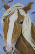 Drawing Of A Horse Head Framed Prints - Lavender Horse Framed Print by Michelle Hayden-Marsan