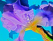 Yearly Prints - Lavender Iris  Print by Chris Berry
