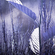 Lavender Digital Art Framed Prints - Lavender Leaves Framed Print by Bonnie Bruno