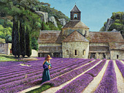 Purples Framed Prints - Lavender Picker - Abbaye Senanque - Provence Framed Print by Trevor Neal