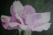 Bloom Paintings - Lavender Pink Rose Painting Flower Painting Floral Art Print by Sally Holt
