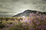 Lavender Wild Print by Andrea Hazel Ihlefeld