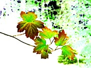 Lively Art - Lavish Leaves 4 by Will Borden