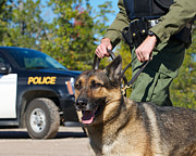 Police Dog Prints - Law Enforcement. Print by Kelly Nelson