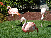 Flamingos Art - Lawn Ornaments by Methune Hively