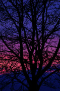 Purple Tree Framed Prints - Layers of Sunset Framed Print by Andrew Soundarajan