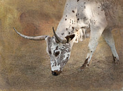 Texas Longhorn Cow Prints - Lazy Days Print by Betty LaRue