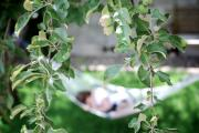 Fruit Tree Art Photos - Lazy Days of Summer by Lisa Knechtel