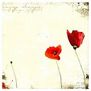 Lazy Digital Art - Lazy Days Or Poppies by John Finnegan-Allen