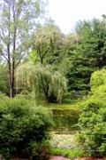 Weeping Willow Posters - Lazy Pond Poster by Deborah  Crew-Johnson