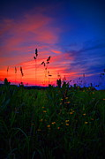 Country Scenes Metal Prints - Lazy Summer Night Metal Print by Emily Stauring