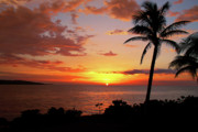 Palm Tree Framed Prints - Lazy Sunset Framed Print by Kamil Swiatek