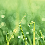Water Droplets Posters - Le Reveil - s02b3 Poster by Variance Collections