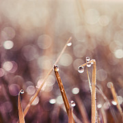 Water Drops Photos - Le Reveil - s04d2 by Variance Collections