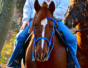 Stallion Photo Originals - Lead Horse by Bill Owen