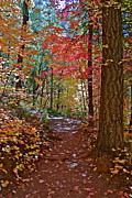 Fall Colors - Lead the Way  by Katherine Halstead