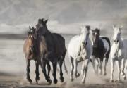 Charging Horses Prints - Leading the Charge Print by Carol Howard