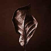 Autumn Photographs Mixed Media Prints - LEAF - Red Brown Closeup Nature Photograph Print by Artecco Fine Art Photography - Photograph by Nadja Drieling