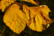 Autumn Photos Originals - Leaf 3 by Bill Owen