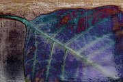 Abstract Leaf Prints - Leaf Abstract Print by Scott Pellegrin