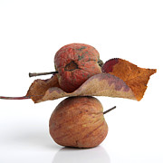 Rotting Photos - Leaf and apples by Bernard Jaubert