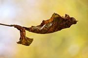 Leaf  Print by Angela Doelling AD DESIGN Photo and PhotoArt