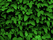 Vine Digital Art Posters - Leaf Curtain In Green Poster by James Granberry