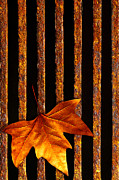 Metallic Prints - Leaf in drain Print by Carlos Caetano