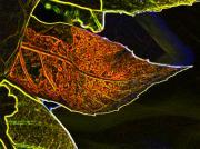 Leaf Interpretation Print by Norman  Andrus