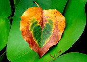 Renee Trenholm Posters - Leaf Leaf Heart Love Poster by Renee Trenholm
