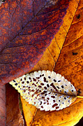Rustics - Leaf Montage No. 2 by The Forests Edge Photography - Diane Sandoval