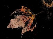 Photo Manipulation Digital Art Posters - Leaf on Bricks Poster by Tim Allen