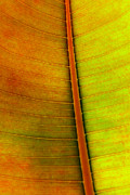 Clean Photo Prints - Leaf Parttern Print by Carlos Caetano