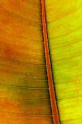 Leaf Parttern Print by Carlos Caetano