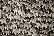 All - Leaf Pattern by Kimberly Gonzales