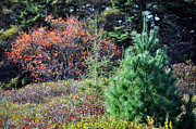Tree Huggers Prints - Leaf Peeper Print by Daryl Macintyre