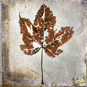 Textured Effect Prints - Leaf  with textured effect Print by Bernard Jaubert