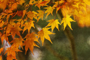 Yellow Leaves Photo Prints - Leaf Zen B Print by Rebecca Cozart