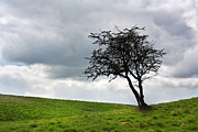 Lonely Tree Prints - Leafless  Print by Semmick Photo