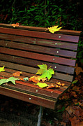 Moss Green Posters - Leafs in Bench Poster by Carlos Caetano