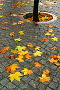 Stone Floor Photos - Leafs in Ground by Carlos Caetano