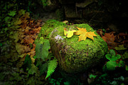 Green Leafs Posters - Leafs on Rock Poster by Carlos Caetano
